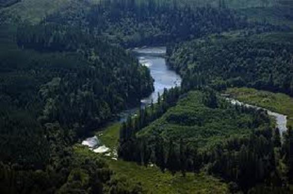 satsop_river