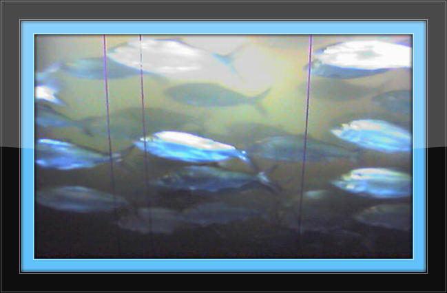 2013 columbia river salmon forecast lip rippers fishing for Columbia river fish counts