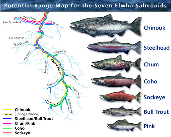 elwah_river_fish_species